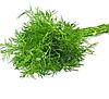 МАМУТ - семена укропа, 1 кг., SEMO