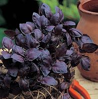РЕД РУБИН - семена базилика, 50 грамм, SEMO