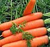 ЯРАНА F1 - семена моркови Нантес,  150 грамм, SEMO