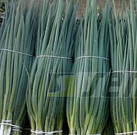 КАЙ - семена лука на перо, 50 грамм, Semo, фото 1