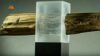 Создана прозрачная древесина, которая сможет заменить пластик и стекло