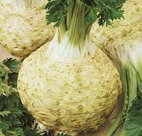 НЕОН - насіння селери кореневої, 10 000 насінин,.Semo