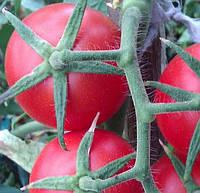 БЕЙБИНО F1 - насіння томату індетермінантного, коктельної типу, 1 000 насінин, SEMO