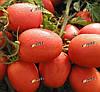 ДЕНАР - семена томата детерминантного, 10 000 семян, SEMO