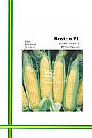 Семена Кукурузы Бостон F1(большая фасовка20гр