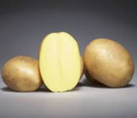 Озирис семена картофеля 2 репр 12грн/кг