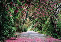 Фотообои Komar 8-985 Wicklow Park
