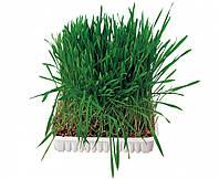 Семена травы для грызунов Trixie Small Animal Grass