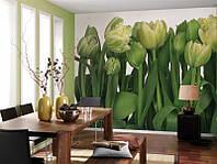 Фотообои на стену «Тюльпаны». Komar 8-900 Tulips