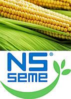 Семена кукурузы Новый Сад различных гибридов. Урожай 2015 года