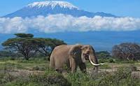 Сафари в парках Танзании + отдых на о. Занзибар.