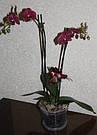 Кашпо для орхидей 17см/2,2л с подставкой, фото 3