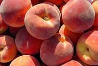 Саженцы персика Редхейвен, фото 1