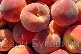 Саженцы персика Редхейвен