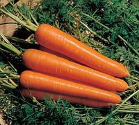 Семена моркови Скарлет