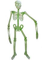Скелет фосфорный 30см 090316-086