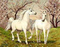 Раскраска на холсте без коробки Идейка Пара единорогов (KHO2431) 40 х 50 см