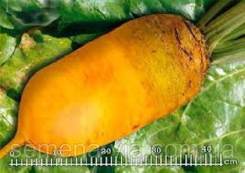 Свекла кормовая Урсус Поли (0,5 кг)