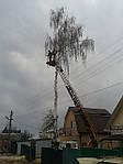 Обрезка деревьев Киев.