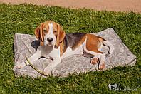 Матрас для средних и больших собак Elegant Millitary 80х50х8