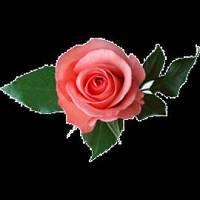 Отдушка Роза, 1 литр