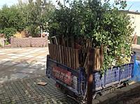 Вывоз листьев,веток