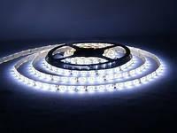 LED лента eco  SMD  3528  4.8 w  12v  60d  IP33. ( Белый )