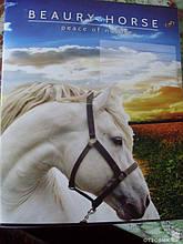 Тетрадь Цветная 36 листов (линия) Картинки в ассортименте