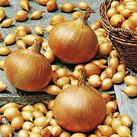 Лук голландский сорт Стурон среднеранний репчатый,  для весенней посадки округлой формы желто-коричневый