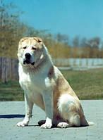 Щенки грузинских горных собак
