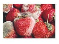 Защита, дезинфекция плодоовощной продукции (Ягоды, Фрукты, Овощи) - увеличение сроков хранения.