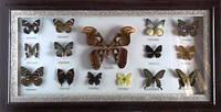 Картина с бабочками 15 шт 800х400х30
