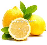 Семена насіння бонсай Съедобные желтый лемон