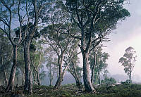 Komar FANTASY FOREST 8-523 Фотообои на стену «Фантастический лес»