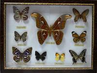Картина бабочка 6