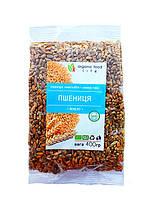 Пшеница озимая органическая 400 грамм