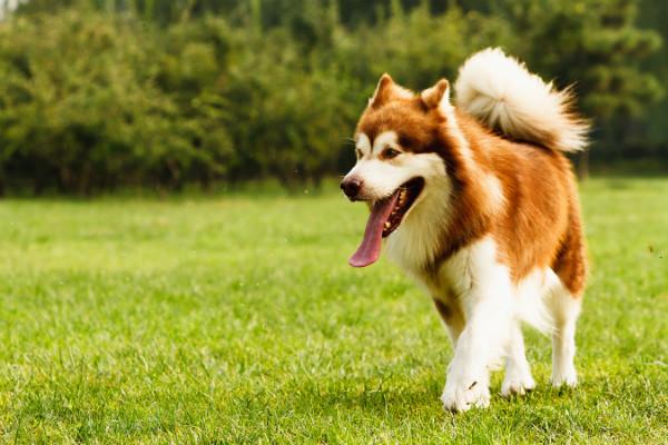 Ошейники для собак светящиеся