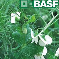 Базагран ВР (20л) - послевсходовый гербицид на зерновые культуры, кукурузу, рис, сою, горох и др.