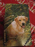 Серия-собаки лабрадор новая открытка БРИТАНИЯ конв