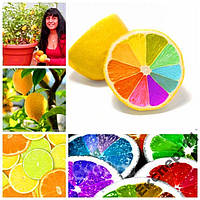 10 семян лимона разноцветного /  лимон - 10 семян