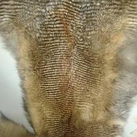 Мех натуральный лиса с тонировкой шкуры