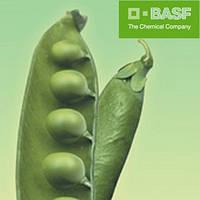 Базагран М ВР (5л) - послевсходовый гербицид на зерновые культуры, горох, овес и др.