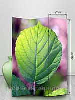 Ширма, 180см, Зеленый лист, Киев