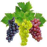 Защита винограда от заморозков.