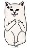 Дерзкий белый чехол для iPhone 4/4S - Кот с факом