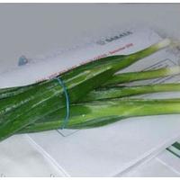 Лонг Уайт Кошигая насіння цибулі на перо ранньої 60 днів Sakata 50 г