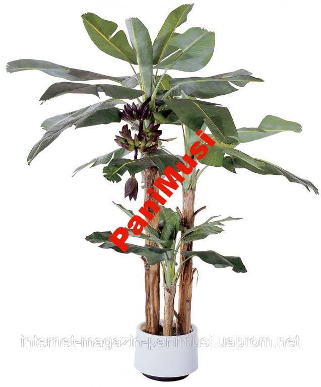 Банановая Пальма семена + инструкция по высеву