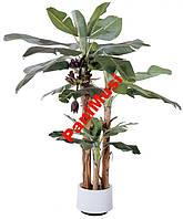Банановая Пальма семена + инструкция по высеву, фото 1