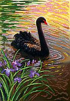 Схема для вышивки бисером Черный лебедь, размер 28х40 см