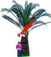 Морозостойкая Джемовая пальма семена + инструкция, фото 1